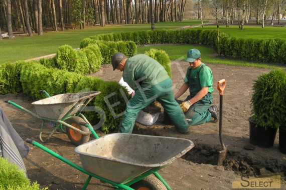 фотография Высадка растений питомника садовых и декоративных растений – Weber Baumschule