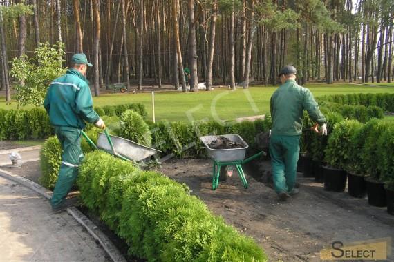 Фото Работы по Высадке растений питомника садовых и декоративных растений – Weber Baumschule