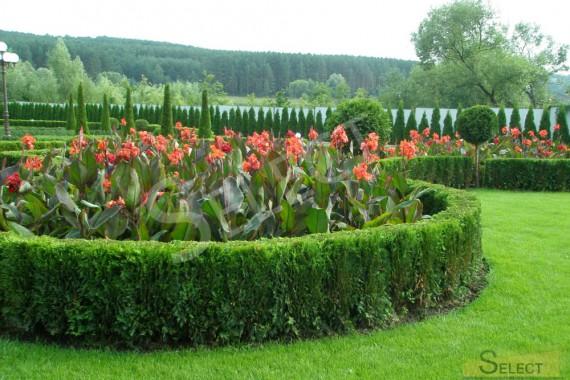 Цветочная поляна огороженная куставим из питомника